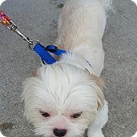 Adopt A Pet :: Mac - Jacksonville, NC
