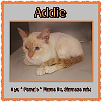 Adopt A Pet :: Addie - Richmond, CA