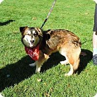 Adopt A Pet :: Sophie - Omaha, NE
