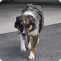 Adopt A Pet :: Mandy - Allentown, PA