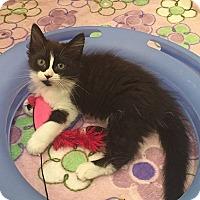 Adopt A Pet :: Geneva - Tampa, FL