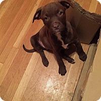 Adopt A Pet :: MILEY - Albuquerque, NM