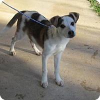 Adopt A Pet :: Asia - Rocky Mount, NC