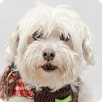Adopt A Pet :: Bailey - Westfield, NY