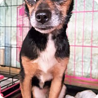 Adopt A Pet :: Lala - Gretna, FL