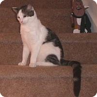 Adopt A Pet :: Piper - Stafford, VA