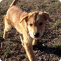Adopt A Pet :: BUTTERCUP - Sardis, TN