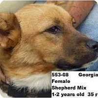 Adopt A Pet :: Georgia - RESCUED! - Zanesville, OH