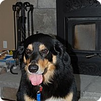 Adopt A Pet :: Max - Douglas, ON