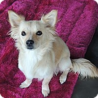 Adopt A Pet :: Peaches - La Habra Heights, CA
