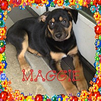 Adopt A Pet :: Maggi - Houston, TX