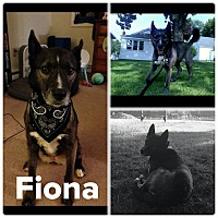 Adopt A Pet :: Fiona - ROME, NY