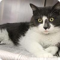 Adopt A Pet :: C-67240 Barry - Westampton, NJ