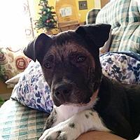 Adopt A Pet :: MooMoo - Carteret/Eatontown, NJ