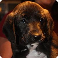 Adopt A Pet :: Heaven - Royal Palm Beach, FL