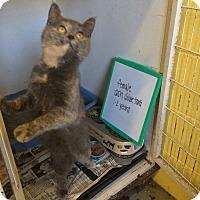 Adopt A Pet :: Sparkles - Bishopville, SC