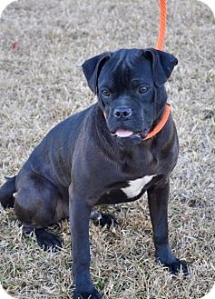 Pug Mix Dog for adoption in Grand Bay, Alabama - Eeyore