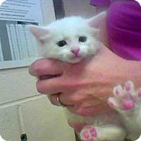 Adopt A Pet :: A271124 - Conroe, TX