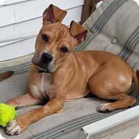 Adopt A Pet :: Rudy - Dayton, OH
