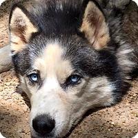 Adopt A Pet :: Teko - Memphis, TN