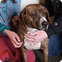 Adopt A Pet :: Tee Tee - Rockville, MD