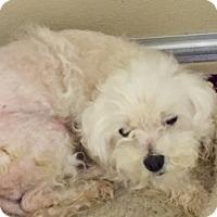 Adopt A Pet :: Peanut - HELP! - Lansing, MI