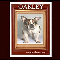 Adopt A Pet :: Oakley - Alabaster, AL