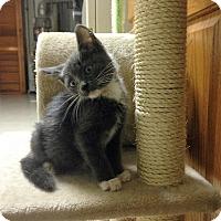 Adopt A Pet :: Dixie - River Edge, NJ