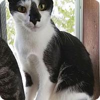 Adopt A Pet :: Juniper - Philadelphia, PA