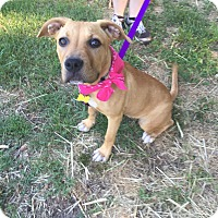 Adopt A Pet :: Montana - Richmond, VA
