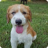 Adopt A Pet :: Denver - Southington, CT