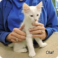 Adopt A Pet :: Olaf - Slidell, LA