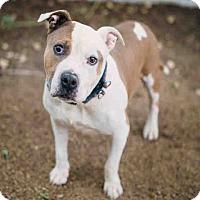 Adopt A Pet :: Bumbles - Beverly Hills, CA
