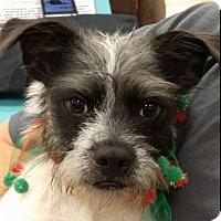 Adopt A Pet :: Chester - Von Ormy, TX