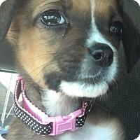 Adopt A Pet :: Opal - Albemarle, NC