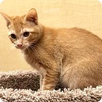 Adopt A Pet :: Leo - Lake Elsinore, CA