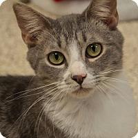 Adopt A Pet :: Thomas - Georgetown, TX