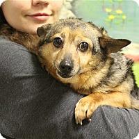 Adopt A Pet :: Sugar Blossom - Elyria, OH