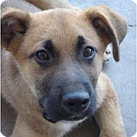 Adopt A Pet :: Boscoe - Lake Forest, CA