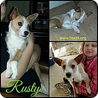 Adopt A Pet :: Rusty - Plano, TX