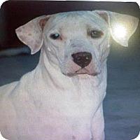 Adopt A Pet :: Lizzie - Scottsdale, AZ