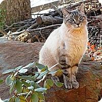 Adopt A Pet :: Alberto - Easley, SC