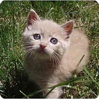 Adopt A Pet :: Clyde - Davis, CA