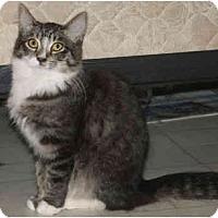 Adopt A Pet :: Jarmila - Davis, CA