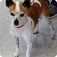 Adopt A Pet :: Triumph - Costa Mesa, CA