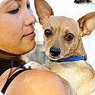 Adopt A Pet :: Pico