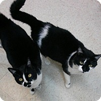 Adopt A Pet :: Lucy and Ethel - Trevose, PA