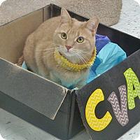 Adopt A Pet :: Caroline - Chambersburg, PA
