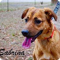 Adopt A Pet :: Sabrina - Daleville, AL