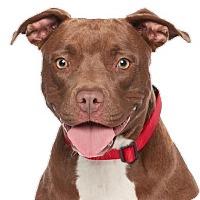 Adopt A Pet :: Miranda - Los Angeles, CA